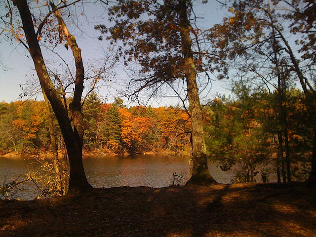Harold Parker State Forest in Andover, Massachusetts